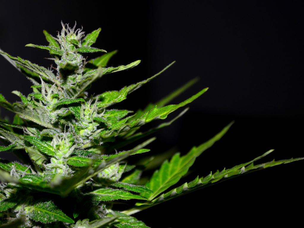 Cannabis Countdown: Top 10 Marijuana Stock News Stories Of