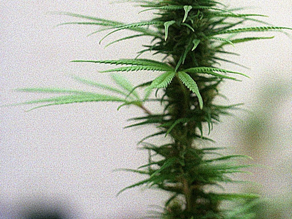 Why Industrial Hemp Could Prove A Larger Economic Driver Than Marijuana | Benzinga