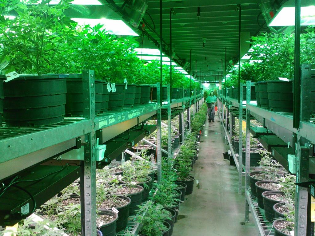 The green house yelp - The Company That Wants To Be The Yelp For Marijuana