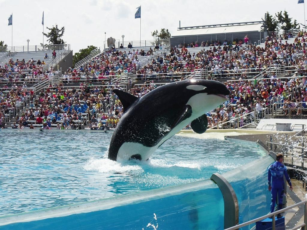 Seaworld entertainment nyseseas seaworld whale featured in seaworld whale featured in black fish faces deteriorating health social sentiment extremely negative thecheapjerseys Choice Image