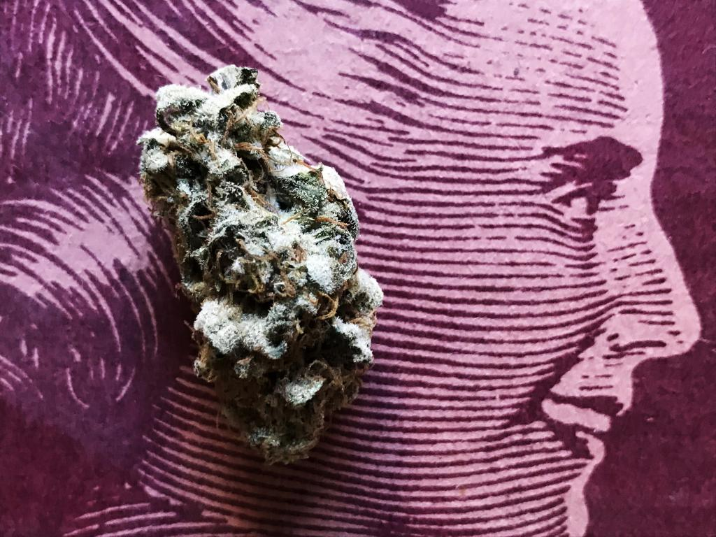 What The Public Needs To Know: Your Brain Is Already On CBD | Benzinga