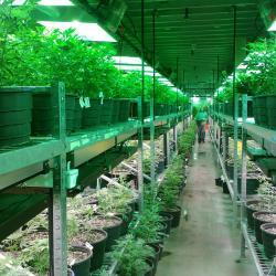 58832b2583ba7 5 Execs Talk Business Models At Cannabis Capital Conference
