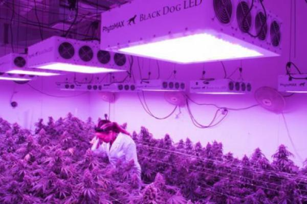 Black Dog Grow Technologies Approved To Run Indoor Hemp Research Facility In Colorado