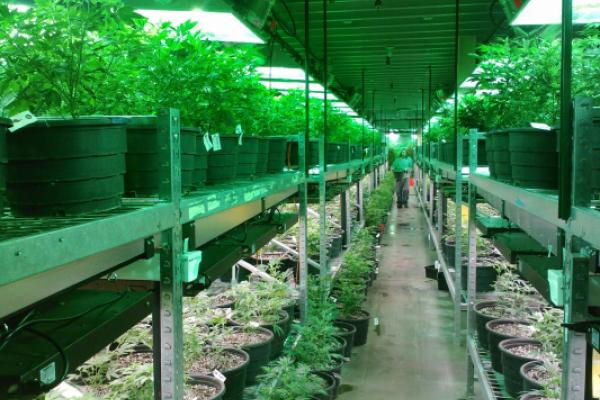 Harvest Health & Recreation Buys Nevada Grow Facility From MJardin Group In $35M Deal