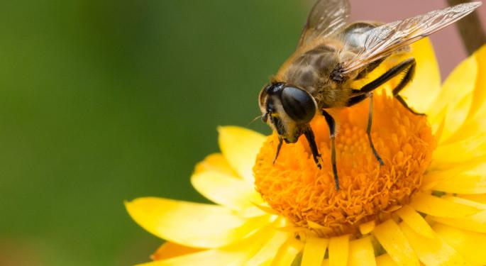 Save The Bees: They Could Save The Economy