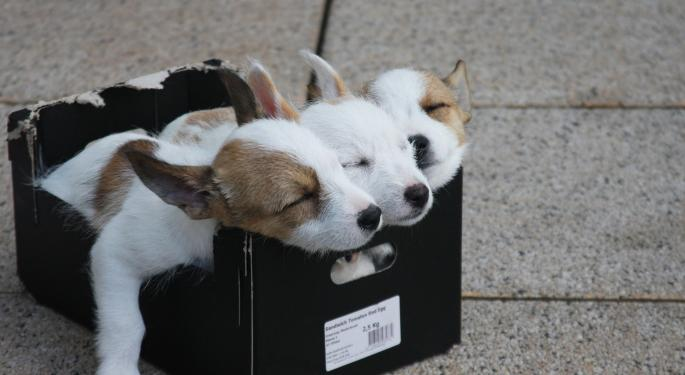 The Pups Of Wall Street: A College Student's Perspective Of Banking Internships