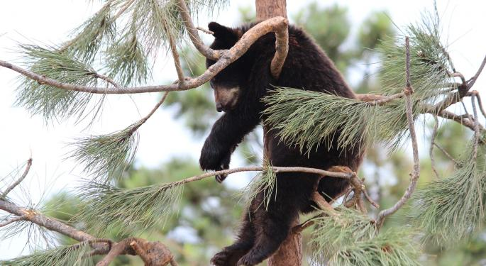 While 'Baby Bears' Are Hibernating, Some Think Goldilocks Growth Phase Is Next