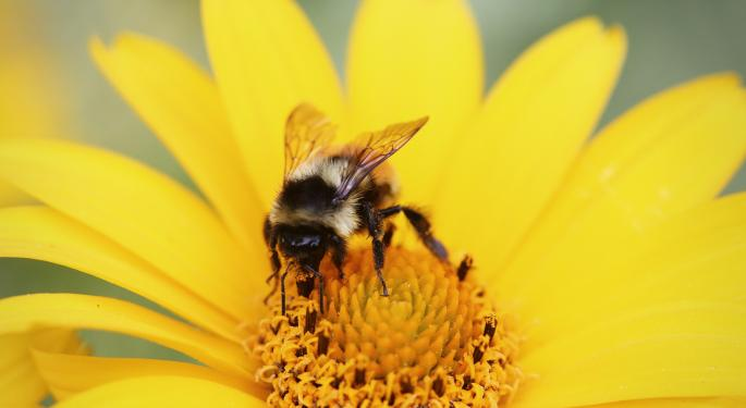 Bees: The Latest Casualty Of Western Economics?