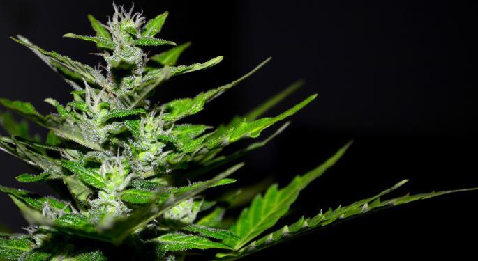 Decline In Medical Cannabis Patient Participation