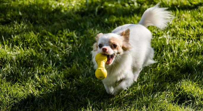 Chewy IPO: A Hybrid Play On Lucrative Pet Care Market, E-Commerce