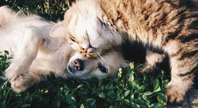 Puration Targets Acquisition In CBD Pet Market