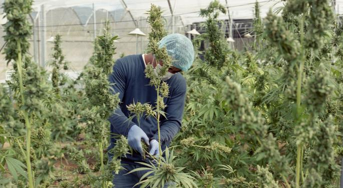 Looking For A Cannabis Job In The Bay Area? This San Francisco Career Fair Might Help