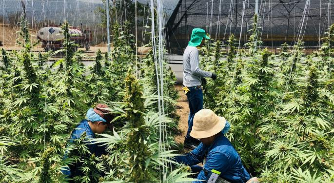From Coffee To Cannabis: Colombia's Choice Between Economic Development And 'CannaMercantilism'