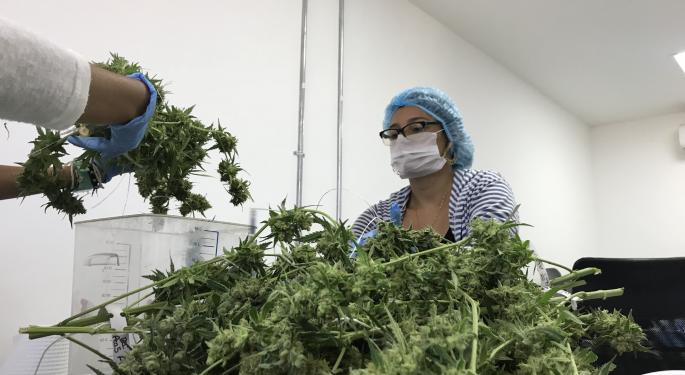 America Is Growing 8X The Amount Of CBD Hemp It Can Consume – And Prices Are Crashing