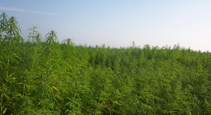 6 Things You Didn't Know About Hemp