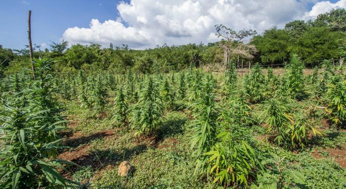 Headset, Marijuana Business Daily Announce Data Partnership