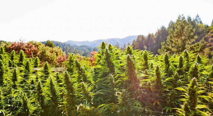 What Is Croptober? What You Need To Know About The Cannabis Harvest Season