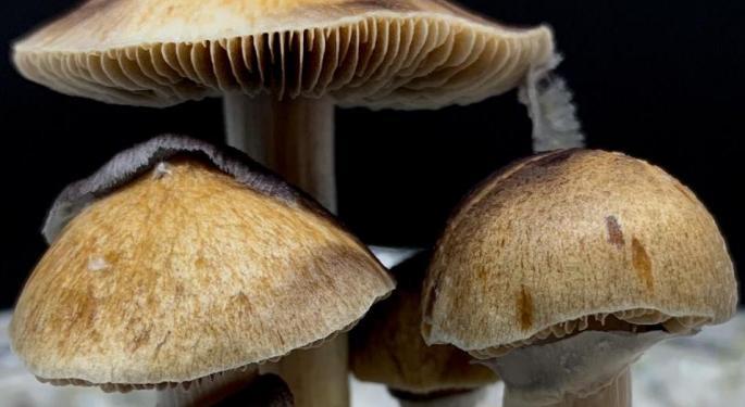 Decriminalize California, Beckley Foundation Partner In Effort To Legalize Magic Mushrooms In The Golden State