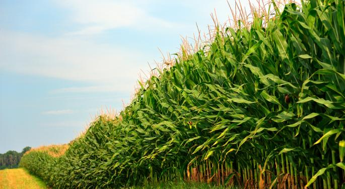 Daily& Weekly Analysis For CORN