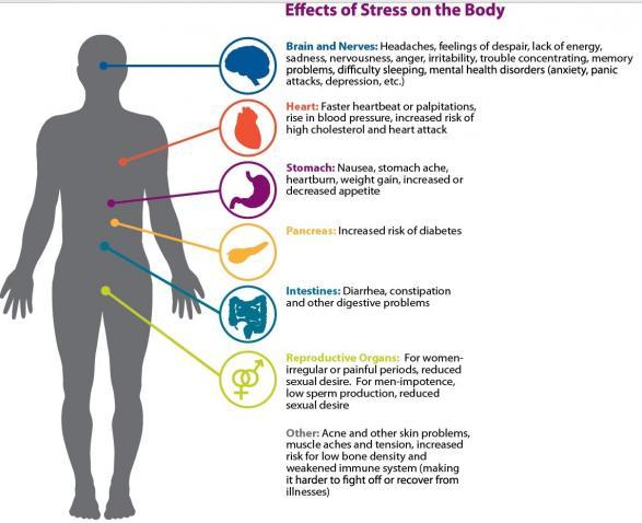 effectsofstress.jpg